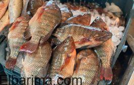 أسعار الاسماك في الاسواق اليوم الاربعاء 24 /9 /2020