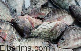 أسعار الاسماك في الاسواق اليوم الخميس 19 /11 /2020