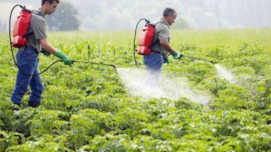 Photo of ارتفاع أرباح كفر الزيات للمبيدات 26% خلال الربع الأول