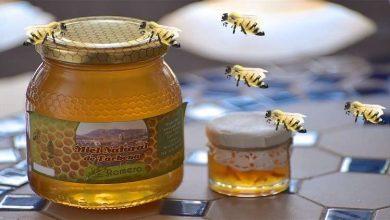 Photo of توقعات بزيادة إنتاج العسل في سوريا
