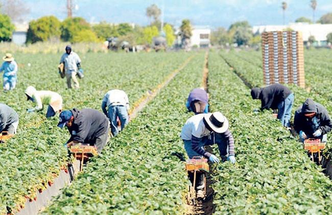 الأمم المتحدة: لابد من إعادة توزيع المساعدات الزراعية دوليا